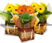 Fall Gift Boxes and Potted Gerbera