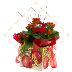 "6"" Kalanchoe Ornament Giftbag"