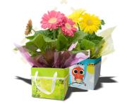 """4.5"""" Gerbera gift boxes"""