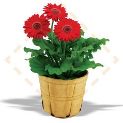 "4.5"" Gerbera in Bushel Basket"