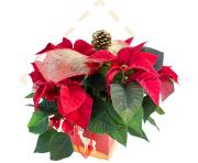 Poinsettia Gift Bags