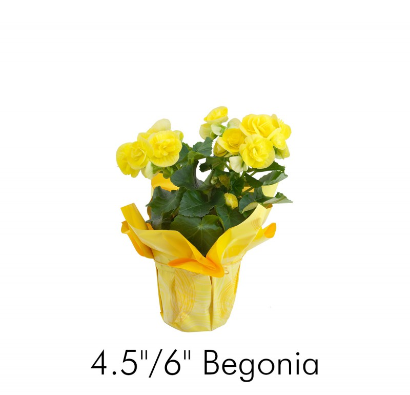 Our Products - Bayview Flowers Ltd