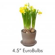 EuroBulbs